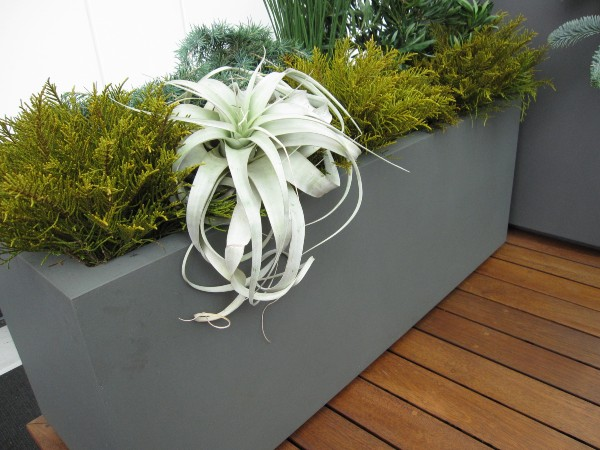 Urban Flower Container Gardening Style Domination Air Plant