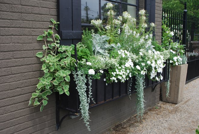 window box window gardening container gardening style domination