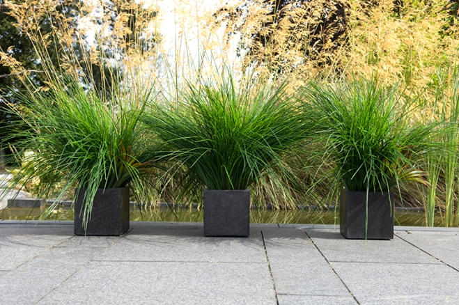Urban Flower Container Gardening Style Domination Grasses