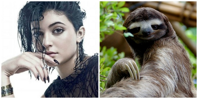 Sloth Collage